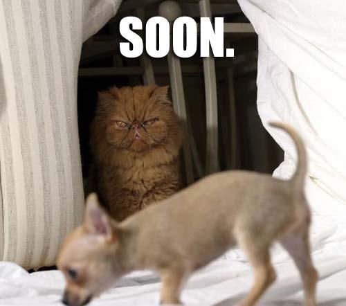 soon1